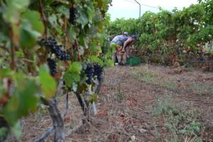 Noviembre, mes de vino - Bodegas Presas Ocampo