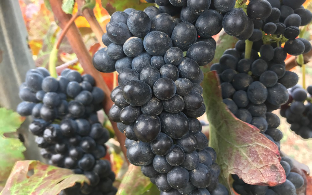 Sabor con historia de nuestros vinos