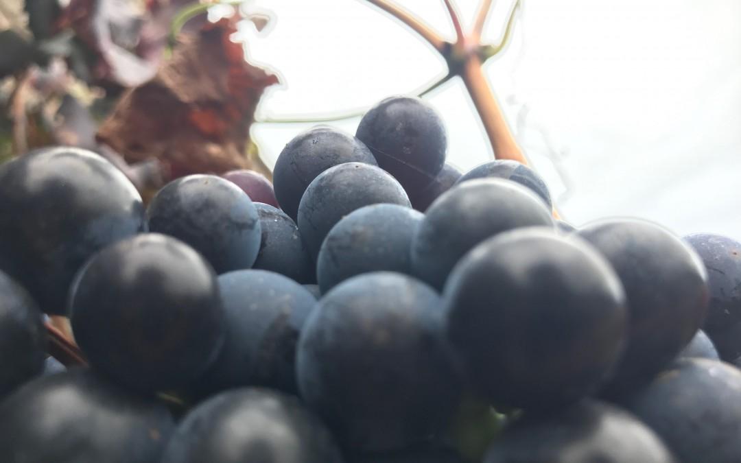 Un poco de enología: La composición del vino