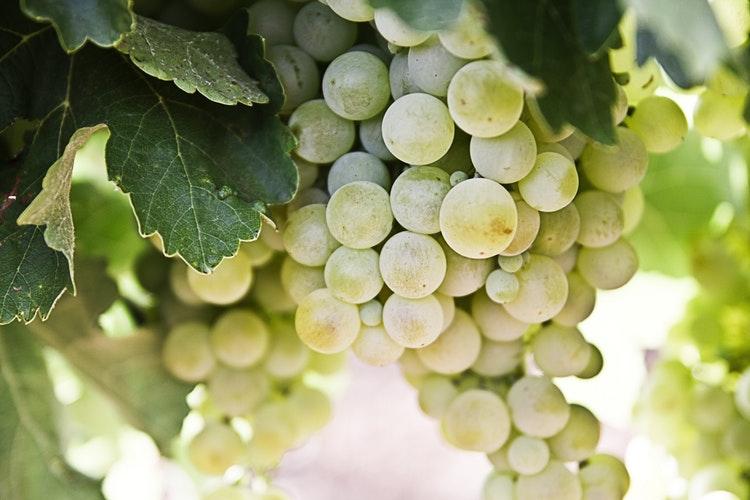 Mujeres profesionales del vino se abren camino en el sector