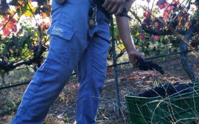 La nueva producción de Presas Ocampo: el 2020 en vinos
