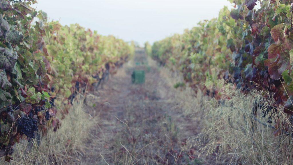 Bodega Presas Ocampo Vinos de Tenerife